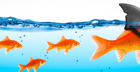 Konica Minolta Leads the Pack in Security